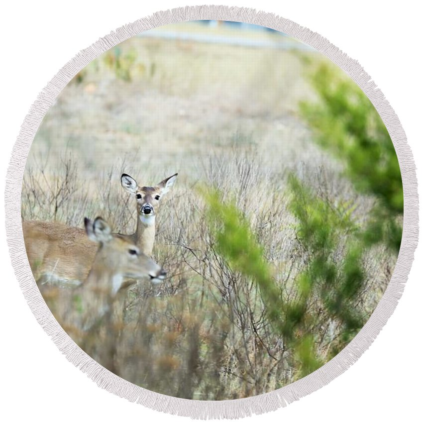 Round Beach Towel featuring the photograph Deer 005 by Jeff Downs