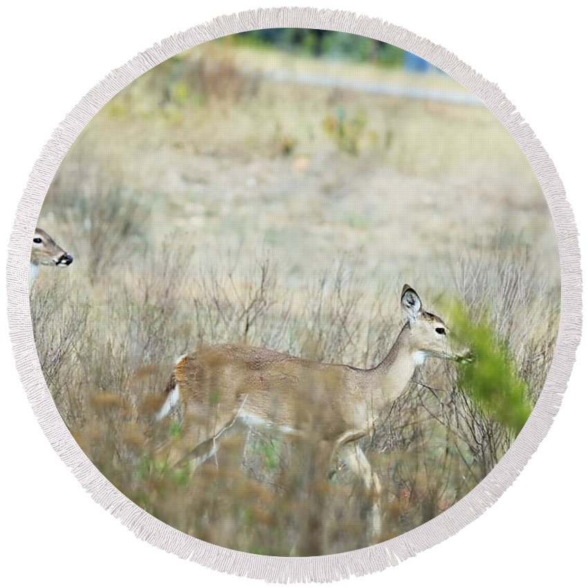 Round Beach Towel featuring the photograph Deer 006 by Jeff Downs