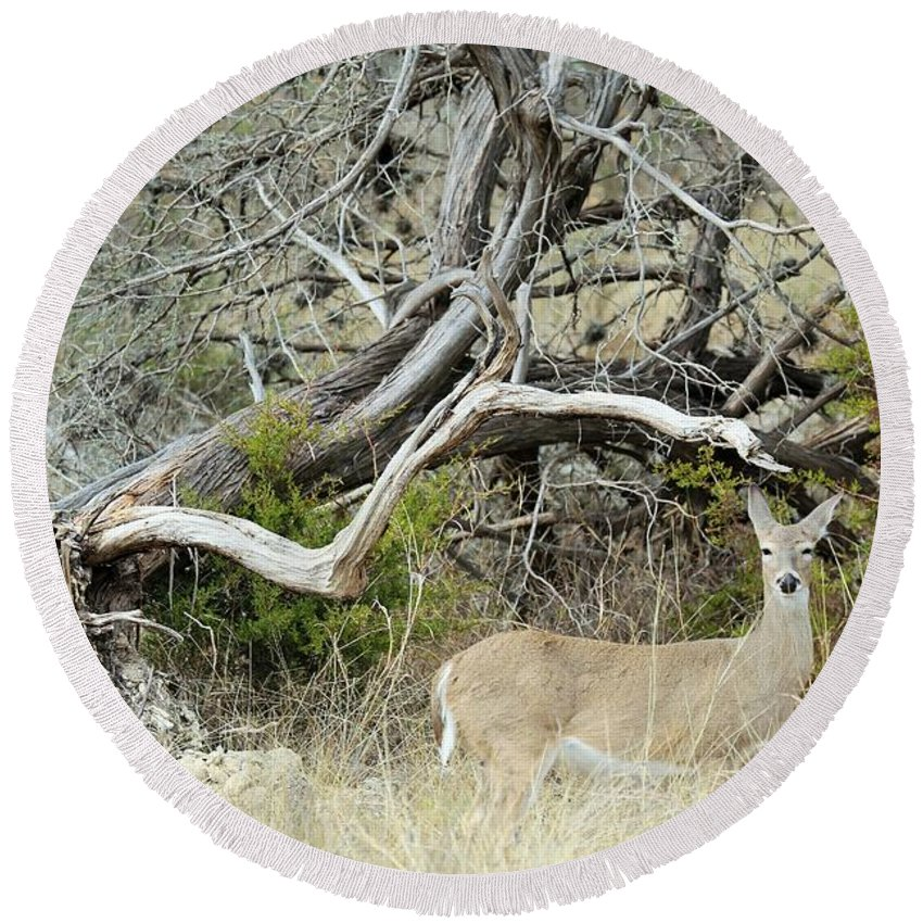 Round Beach Towel featuring the photograph Deer 009 by Jeff Downs