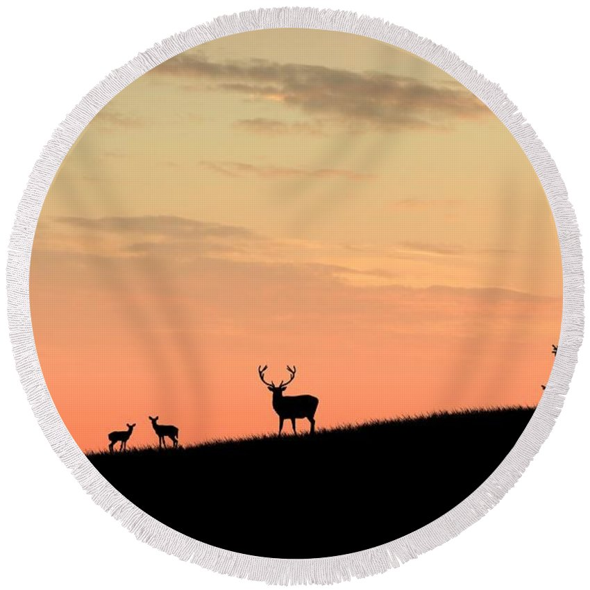 Animals Round Beach Towel featuring the digital art Deer In Silhouette by John Wills