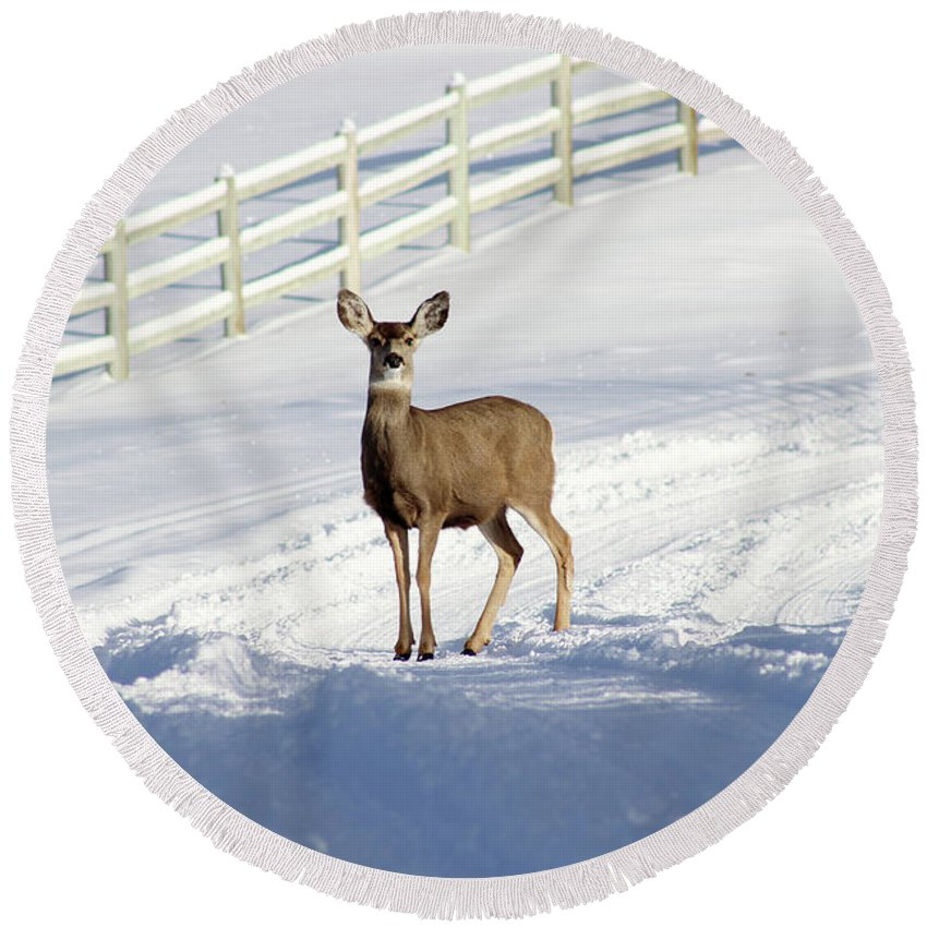 Animal Round Beach Towel featuring the photograph Deer In Snow Covered Road by Travers Morgan
