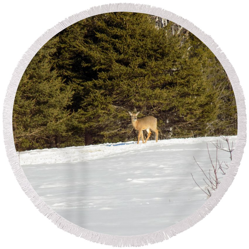 Deer Round Beach Towel featuring the photograph Deer In The Distance by William Tasker