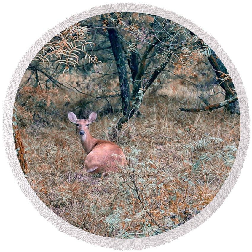 Deer Round Beach Towel featuring the photograph Deer In Woods by Robert Brown