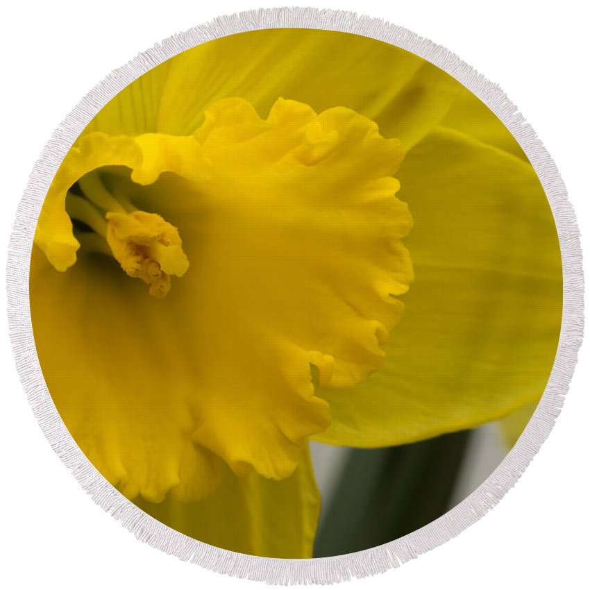 Yellow Round Beach Towel featuring the photograph Delicate by Brian Manfra