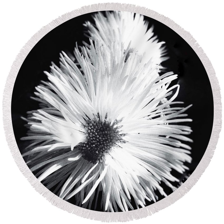 Delicate Round Beach Towel featuring the photograph Delicate Fleabane Daisy by Beth Myer