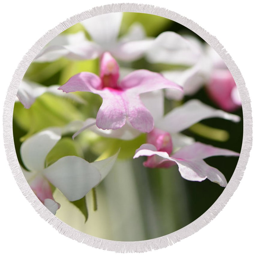 Orchid Round Beach Towel featuring the photograph Delicate Orchids By Sharon Cummings by Sharon Cummings
