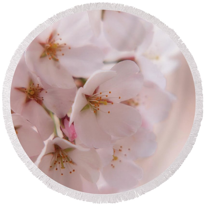 Cherry Blossom Trees Round Beach Towel featuring the photograph Delicate Spring Blooms by Angie Tirado