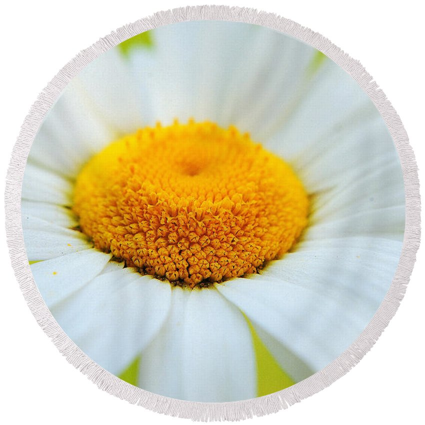Daisy Round Beach Towel featuring the photograph Delightful Daisy by Frozen in Time Fine Art Photography