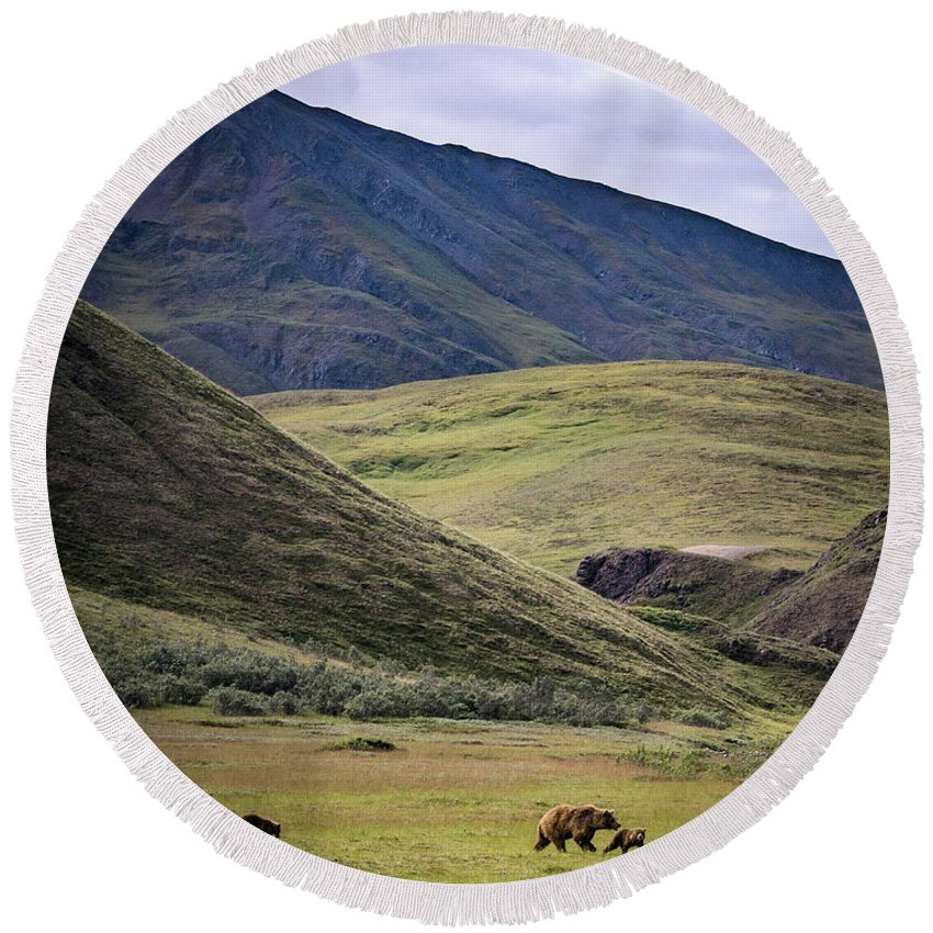 Animals Round Beach Towel featuring the photograph Denali Grizzly Family by Travis Elder