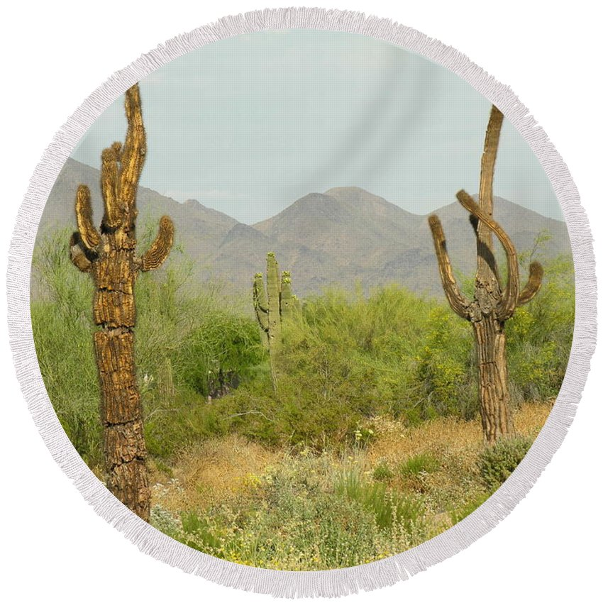 Cactus Round Beach Towel featuring the photograph Desert Cactus by Diane Greco-Lesser