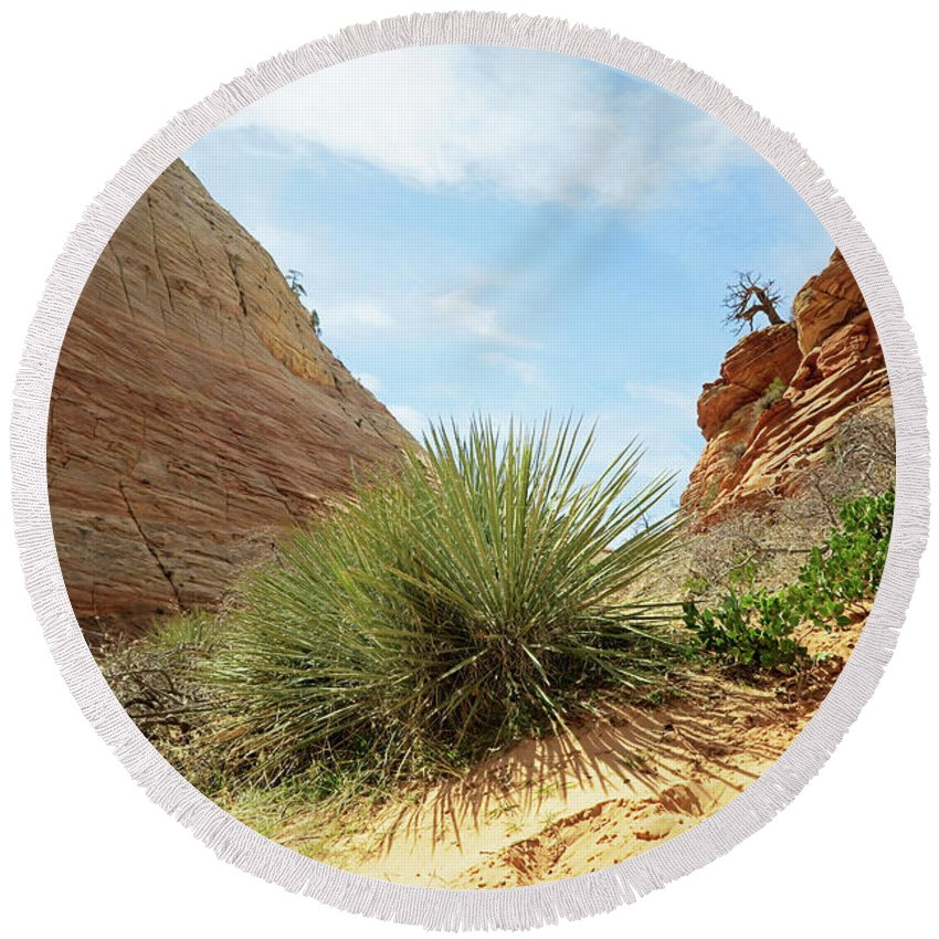 Landscape Round Beach Towel featuring the photograph Desert Greenery by Sue Collura