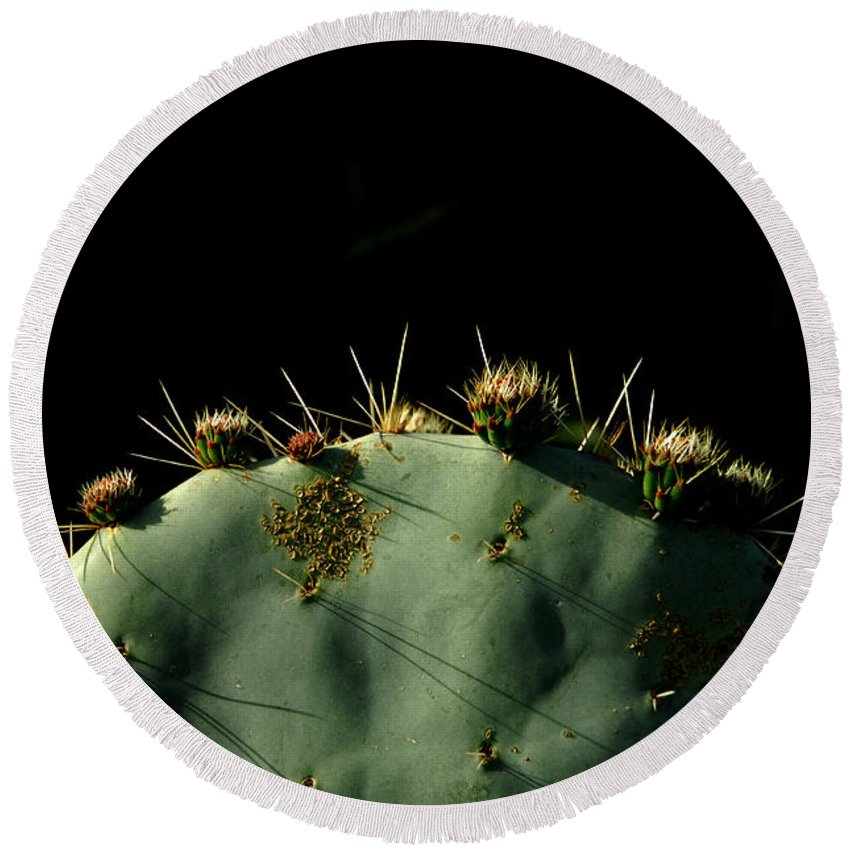 Cactus Round Beach Towel featuring the photograph Desert Landscape by Donna Blackhall