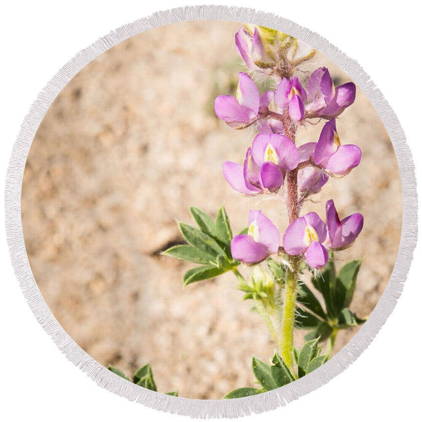 California Round Beach Towel featuring the photograph Desert Lupine by Joan Wallner