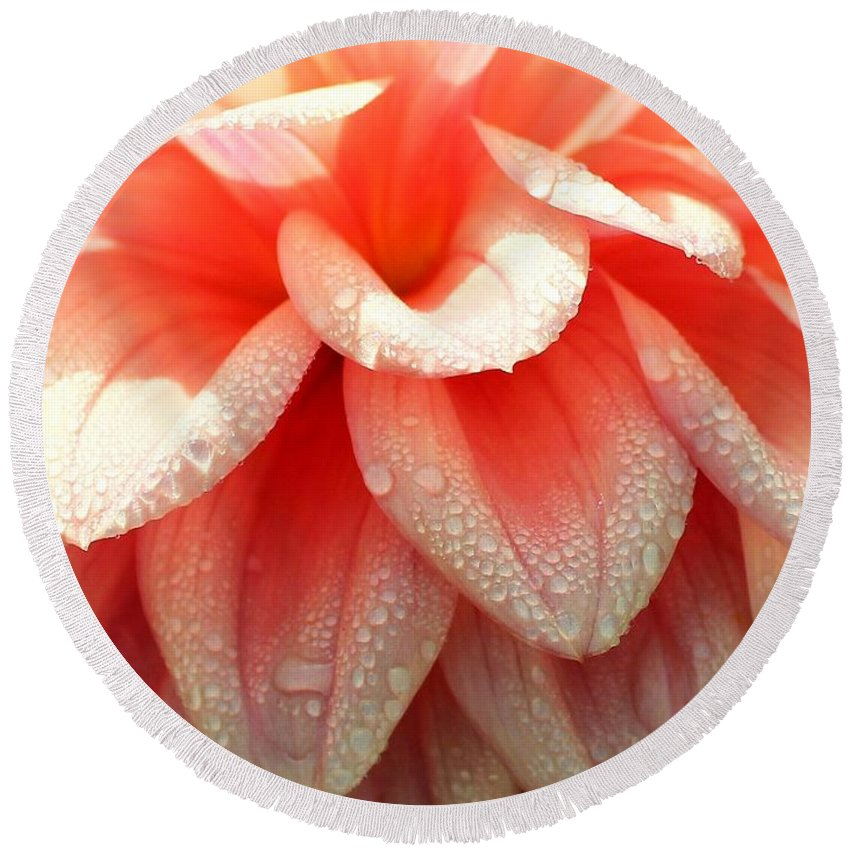 Dahlias Round Beach Towel featuring the photograph Dew -drops On The Dahlia 2 by Jane Powell