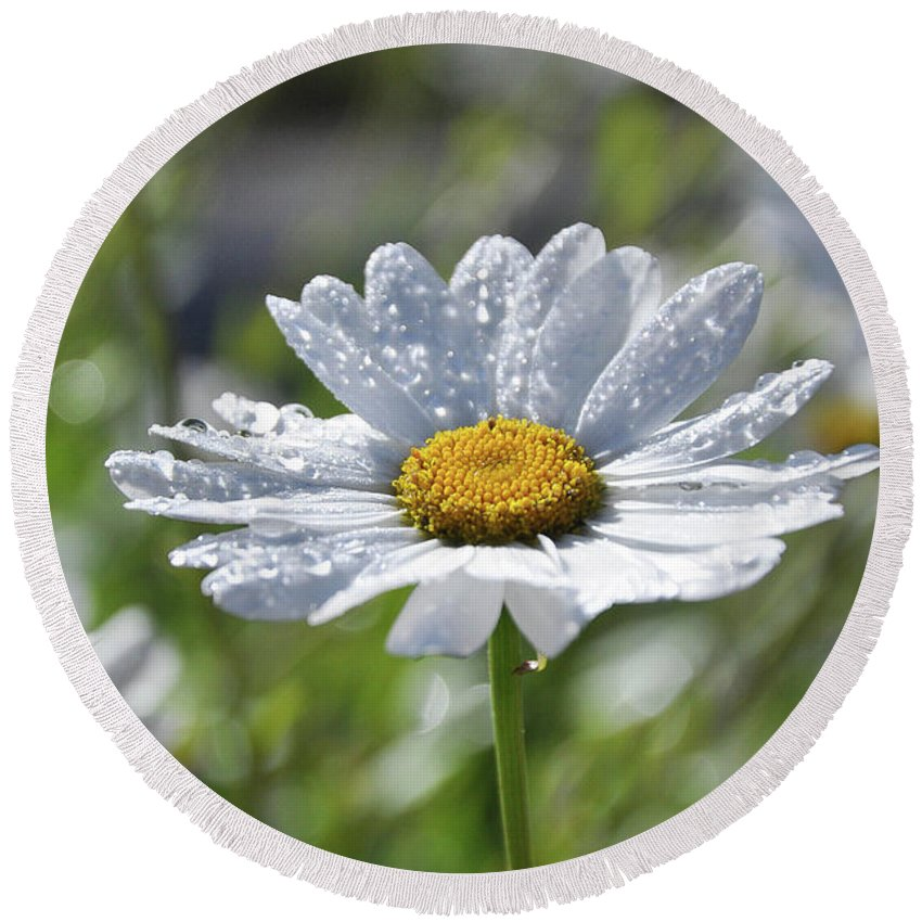 Daisy Round Beach Towel featuring the photograph Dewdrop Daisy by Tina Hunt