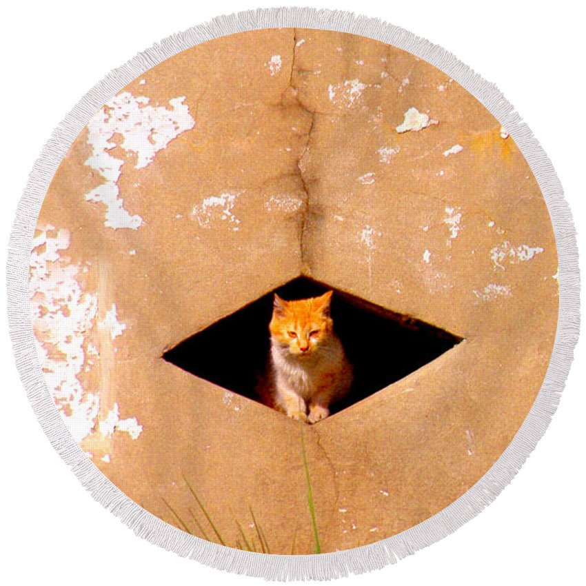 Cat Round Beach Towel featuring the photograph Diamond Kitty by Albert Stewart