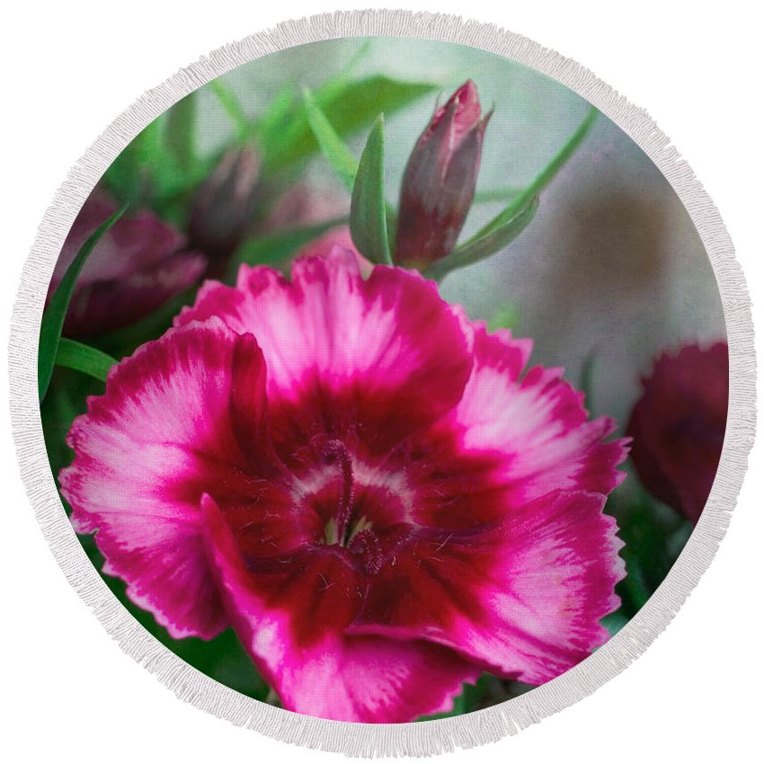 Bloom Round Beach Towel featuring the photograph Dianthus Flower II by David and Carol Kelly