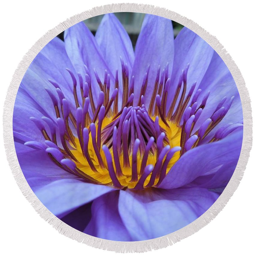 Water Lily Round Beach Towel featuring the photograph Divine by Chad and Stacey Hall