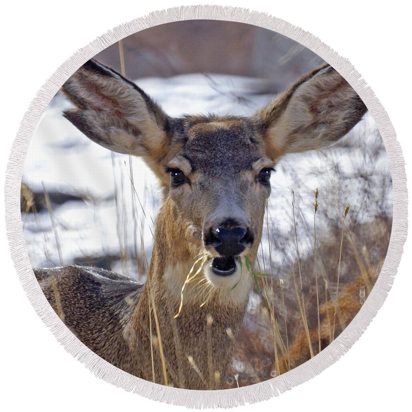 Doe Round Beach Towel featuring the photograph Doe by Heather Coen