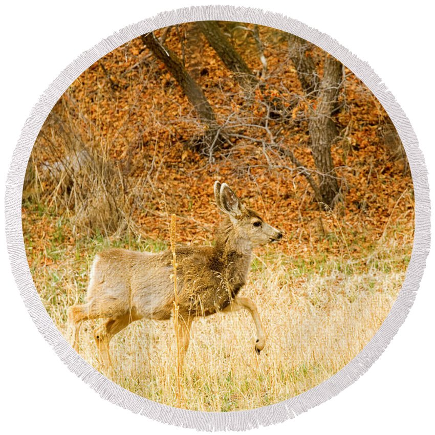 Animals Round Beach Towel featuring the photograph Doe High Stepping On Bald Mountain by Steve Krull