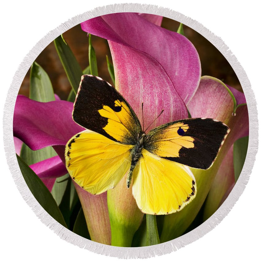 Butterfly Round Beach Towel featuring the photograph Dogface Butterfly On Pink Calla Lily by Garry Gay