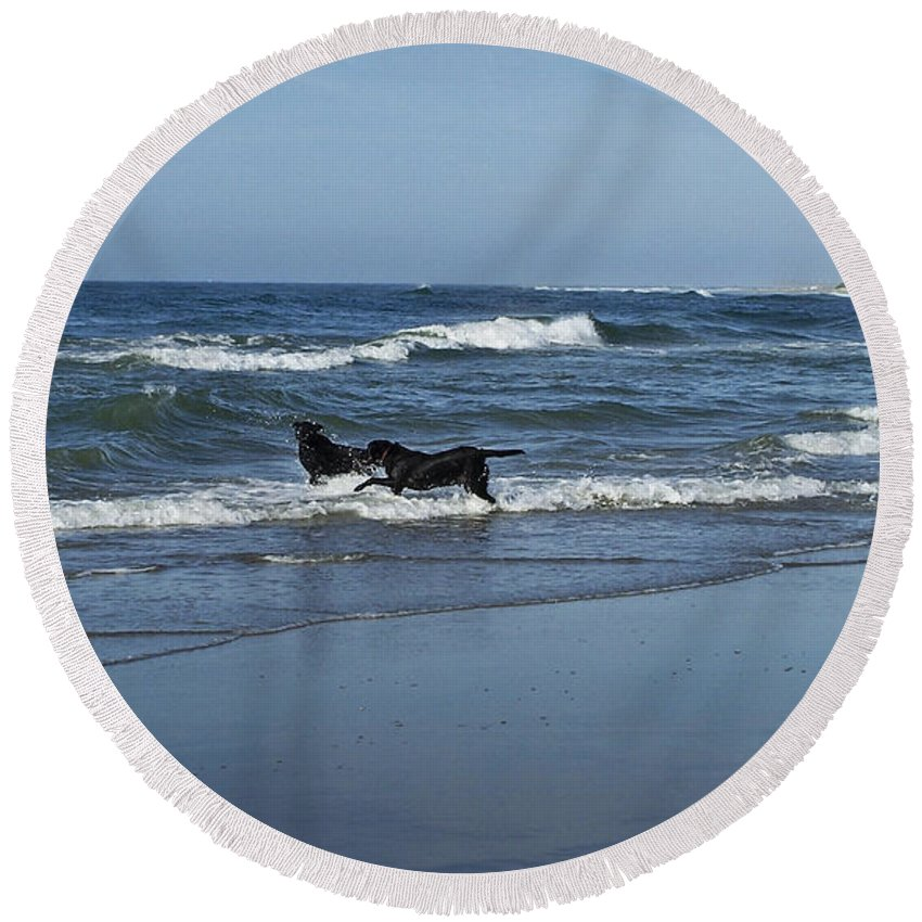 Dog Round Beach Towel featuring the photograph Dogs In The Surf by Teresa Mucha