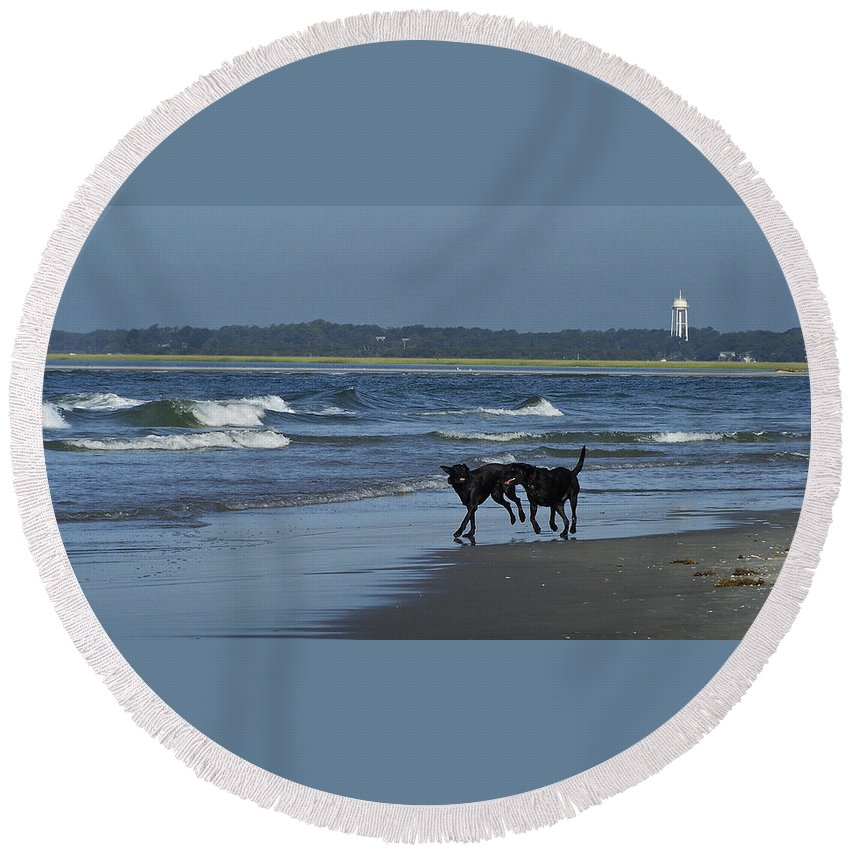 Dog Round Beach Towel featuring the photograph Dogs On The Beach by Teresa Mucha