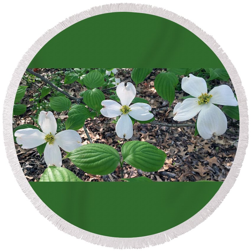 Dogwood Round Beach Towel featuring the photograph Dogwood Blossoms by James Pinkerton