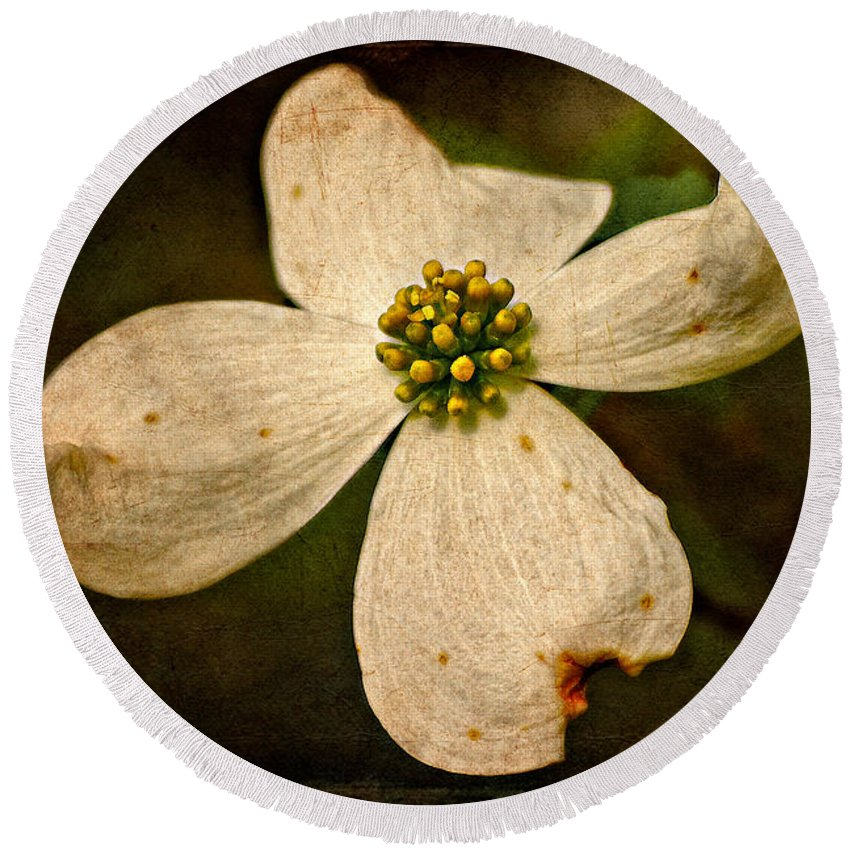 Dogwood Round Beach Towel featuring the photograph Dogwood by Lois Bryan
