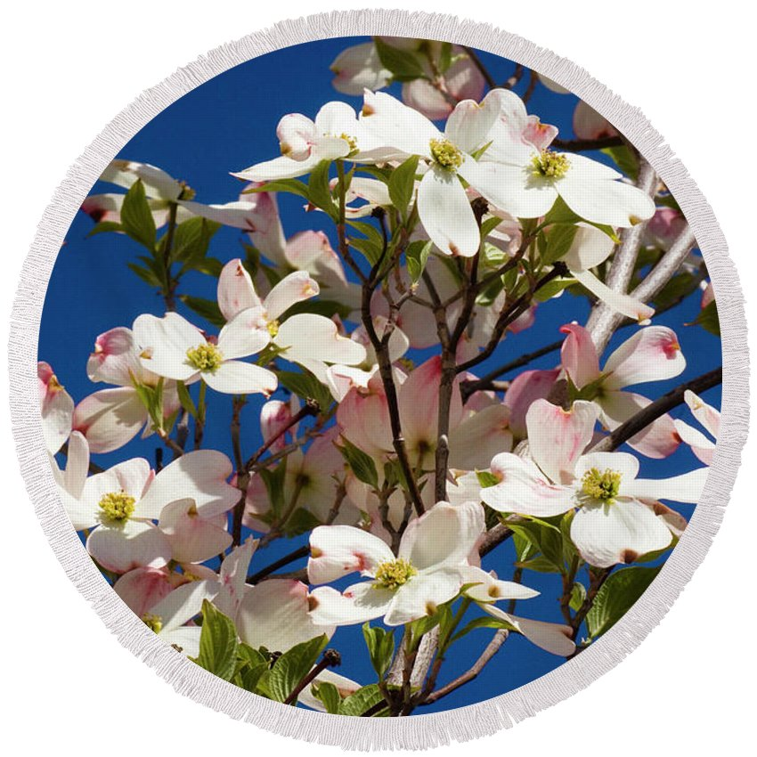Dogwood Round Beach Towel featuring the photograph Dogwood Sky by Jim And Emily Bush