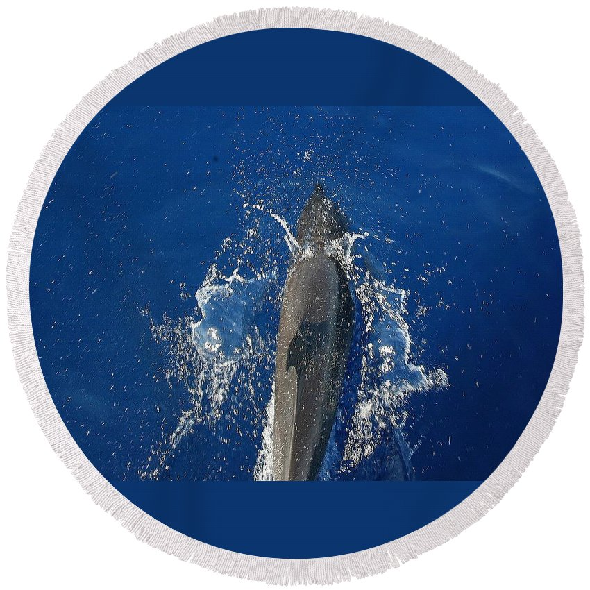 Dolphin Round Beach Towel featuring the photograph Dolphin by J R Seymour