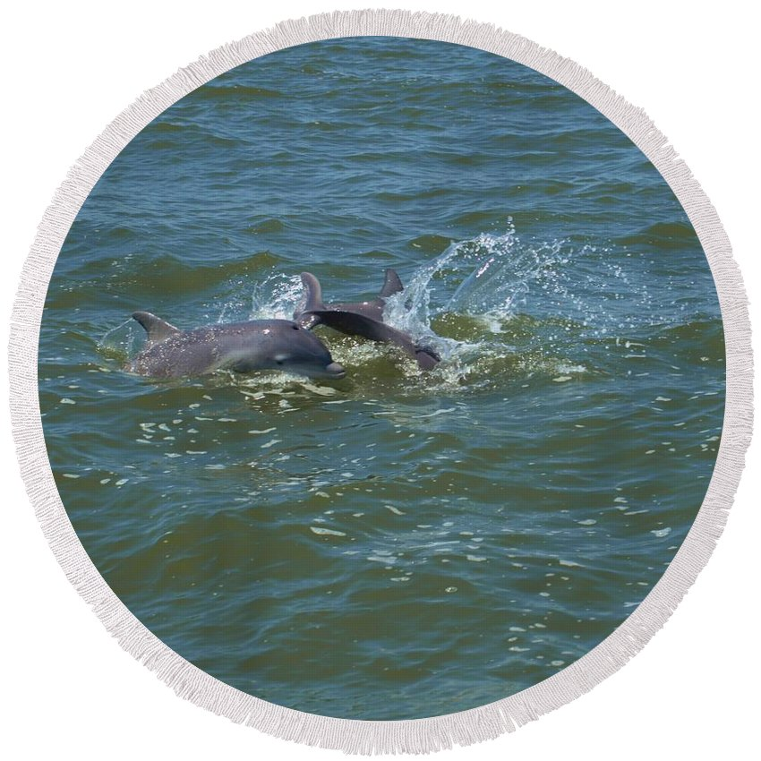 Dolphin Round Beach Towel featuring the photograph Dolphin Race by Terrie Stickle
