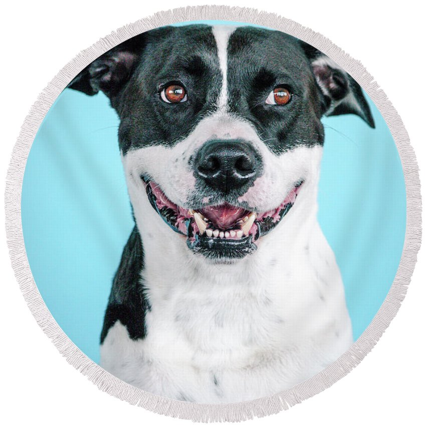 Dogs Round Beach Towel featuring the photograph Domino 3 by Pit Bull Headshots by Headshots Melrose