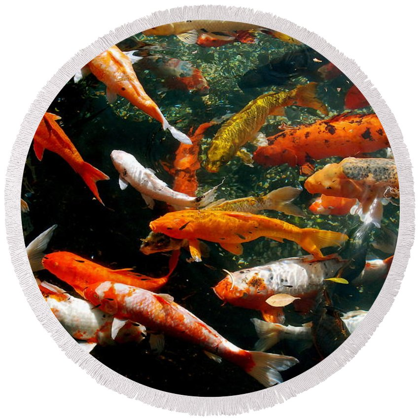 Fish Round Beach Towel featuring the photograph Don't Be Koi Roy by David Coleman