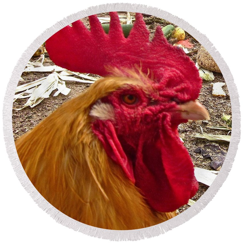 Rooster Photograph Round Beach Towel featuring the photograph Dont Even Think About It by Gwyn Newcombe