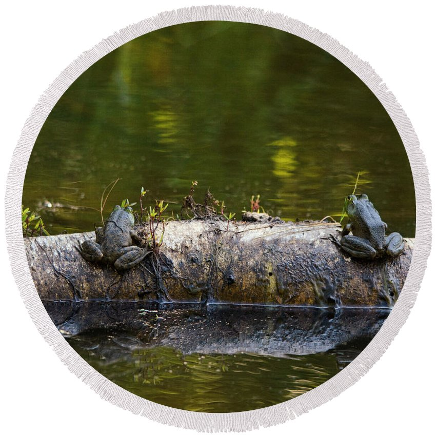 Frogs Round Beach Towel featuring the photograph Don't You Love Mornings Like This by Sue Capuano
