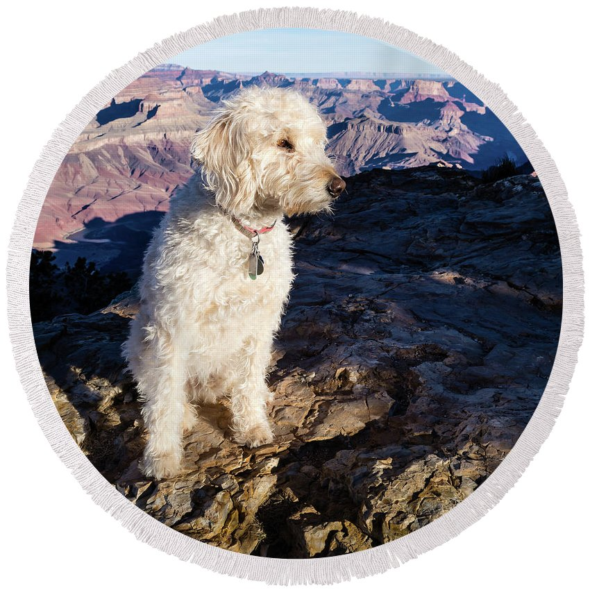Dog Round Beach Towel featuring the photograph Doodle On Grand Canyon Rim by Cary Leppert
