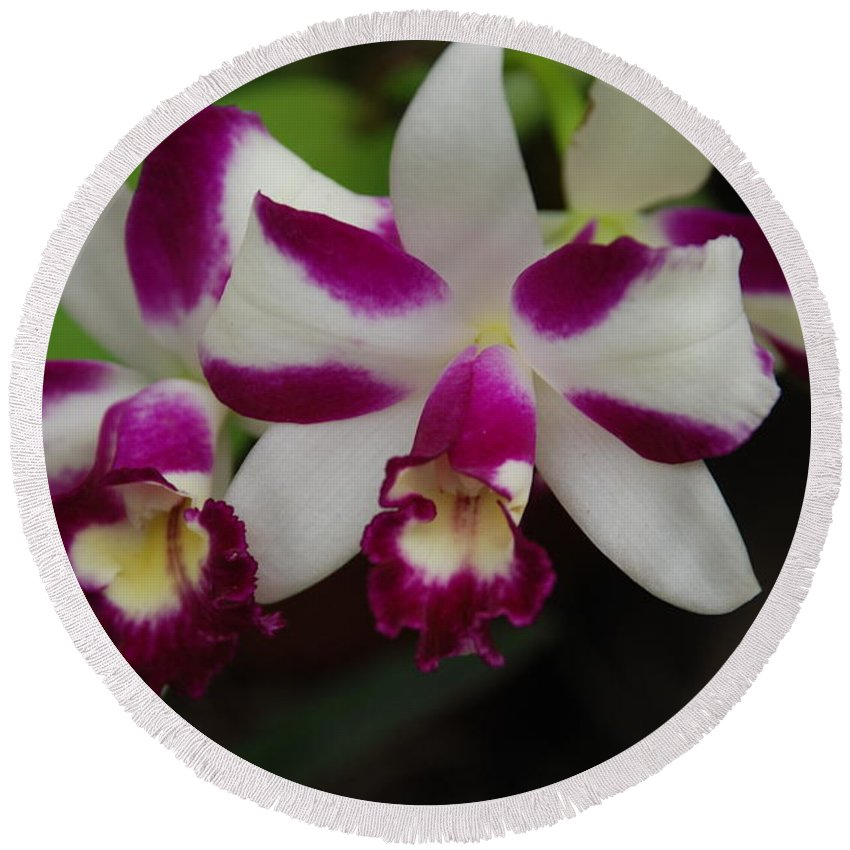 Macro Round Beach Towel featuring the photograph Double Orchid by Rob Hans