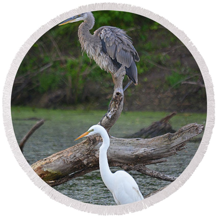 Great Egret Round Beach Towel featuring the photograph Double Trouble by Deanna Cagle