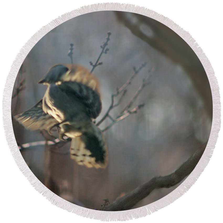 Nature Round Beach Towel featuring the photograph Downey Woodpecker by Steve Karol