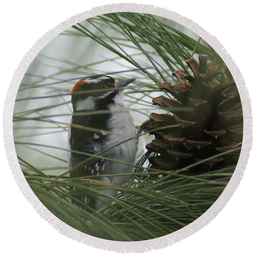 Birds Round Beach Towel featuring the photograph Downy Woodpecker by Ben Upham III