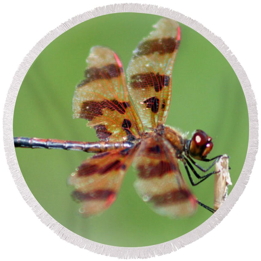 Dragon Round Beach Towel featuring the photograph Dragon Fly by Ben Zell