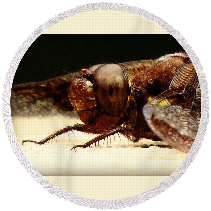 Insect Round Beach Towel featuring the photograph Dragon Fly Head by Julie Dybevik