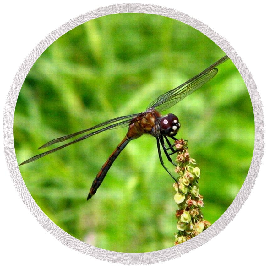 Dragonfly Round Beach Towel featuring the photograph Dragonfly 7 by J M Farris Photography