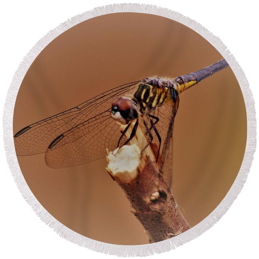 Dragonfly Beauty Round Beach Towel featuring the photograph Dragonfly Beauty by Warren Thompson