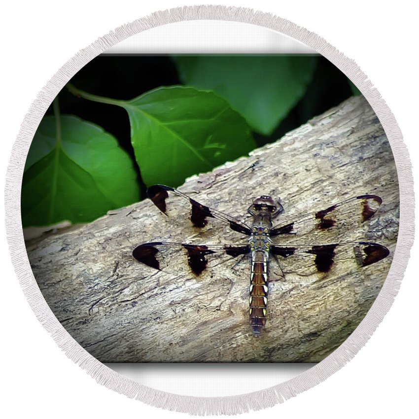 2d Round Beach Towel featuring the photograph Dragonfly On Log by Brian Wallace