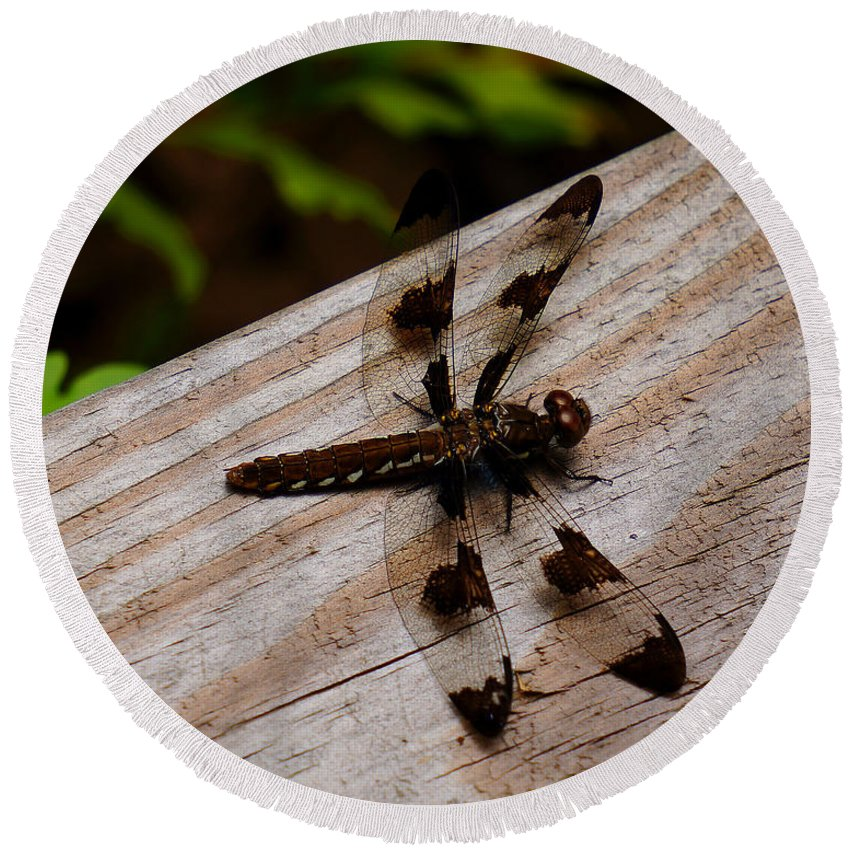 Ann Keisling Round Beach Towel featuring the photograph Dragonfly Spots by Ann Keisling