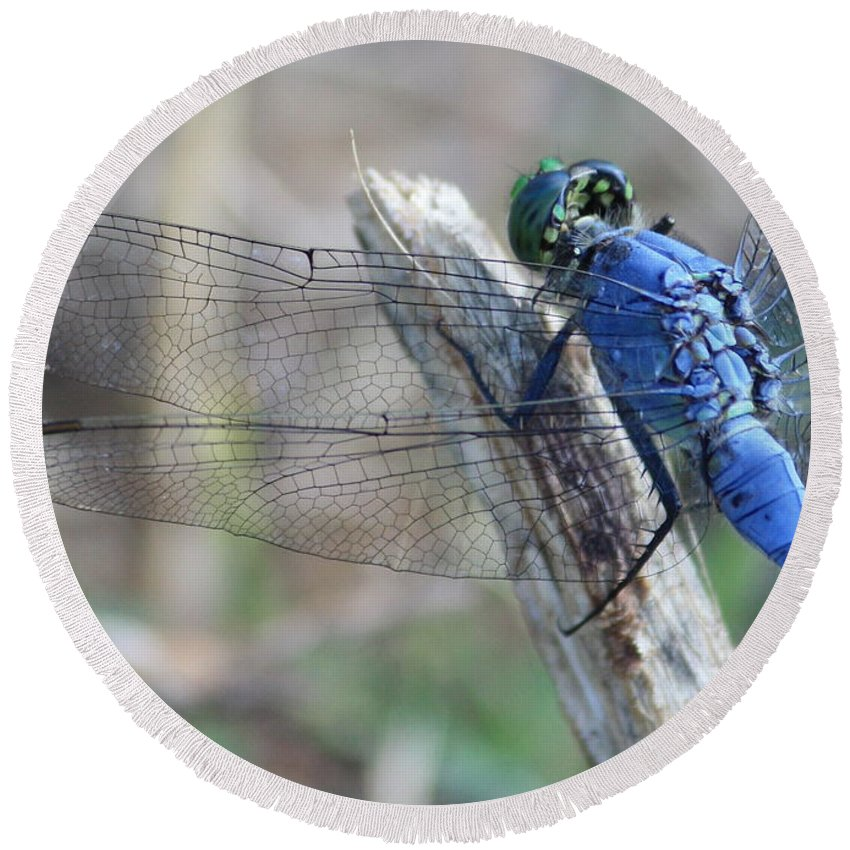 Dragonfly Round Beach Towel featuring the photograph Dragonfly Wing Detail by Carol Groenen
