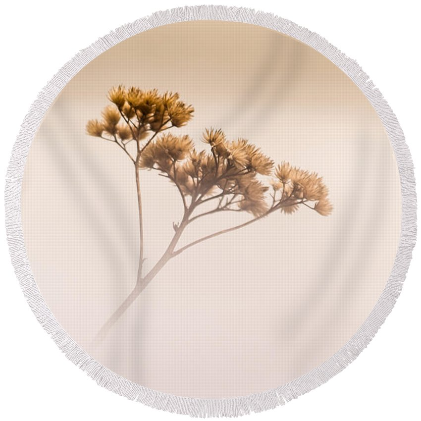 Plant Round Beach Towel featuring the photograph Dreaming Of Spring by Donna Lee