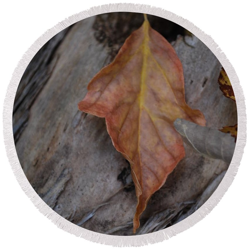 Fall Round Beach Towel featuring the photograph Dried Leaf On Log by Heather Kirk